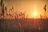 Sun,your guiding light (BigWhitePelican) Tags: helsinki finland vanhankaupunginlahti sun hot sunny summer canoneos70d adobelightroom6 niktools 2017 march