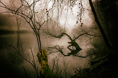 This Is Not Jackson (Craig Joshua Cousins) Tags: landscape scenic ethereal winter lakeside backlight trees reflections