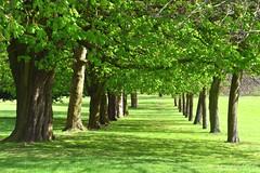 Aston Park, Birmingham (Manoo Mistry) Tags: nikon d5500 tamron 18270 trees parks astonpark openspace green outdoor nikond5500body tamron18270mmzoomlens birminghamuk birminghampostandmail