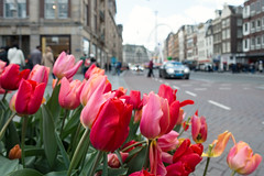 (angheloflores) Tags: amsterdam street city travel architecture damrak tulips colors people urban explore netherlands