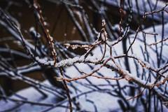 17016746_10155053859786950_3798612107963045352_o (Ashly Edwards Huntington) Tags: huntington tahoe snow water ice forest heavenly cool storm edwardshuntington ashlyedwardshuntington branch winter christmas