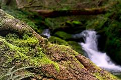 Cascada desenfocada (pitin_os) Tags: cascada agua water naturaleza bosque waterfall