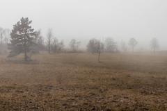 Fog (alexpta) Tags: everydayphoto fog haze landscape