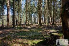 Bäume, Moos und Sonne: Nationalpark-Traumschleife Trauntal-Höhenweg (Frank Hamm) Tags: deutschland rheinlandpfalz hunsrück traumschleife wandern naturpark wald forrest moos moss
