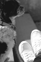 134/365 dog (yanakv) Tags: love dog 50mmf18stm 50mm 365days 365dias me yo yanitophotography canon