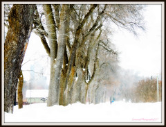 Stormy day (Only time heals wounds) Tags: jardinbotaniquedemontréal garden snowstorm 20170305lovingyou snow white frame nature jardin trees poetic grandespace beautiful peaceful paisible tempêtedeneige