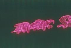 Night series. (Gabriel Plcs) Tags: agfavista asa100 50mm f14 lowlight nightshoot neon analogico analogue argentique filmisnotdead expiredfilm 35mmfilm faded