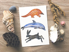 Pangolin, dolphin and a hare (VLADIMIR... . . .) Tags: pangolin dolphin hare animals animalspecies naturalhistoryillustration nature watercolors painting artwork