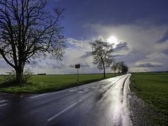 Wet asphalt (++sepp++) Tags: bayern deutschland lechfeld bavaria germany länder april gegenlicht backlight backlit landschaft strase street asphalt bäume trees wet nass wetter weather
