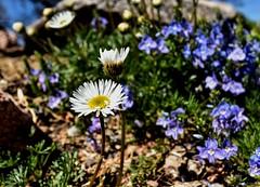 DSC_0280 (Kerstin Winters Photography) Tags: d5500 flower flickrnature flickr blumen landschaft landscape outdoor tamron nikondigital nikondsl
