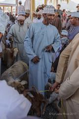 Nizwa, the goat souk (Sylviane Moss) Tags: oman nizwa goat catllre souk suk souq market man omani