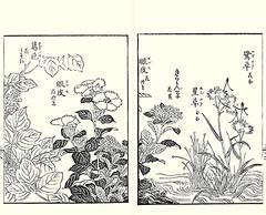 Kudzu, ganpi, aizoon stonecrop, pipewort and egret orchid