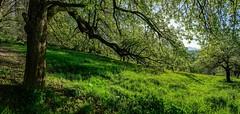 Obstbäume (Oliver Noggler) Tags: feldkirch vorarlberg österreich at obstbäume wildpark sonnenaufgang