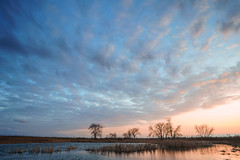 shared with pixbuf (jrobfoto.com) Tags: a7rii alpha fullframe grasses landscape lightroom prairie raw sony springbrookprairie sunset winter