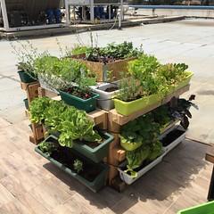 vegetable Corner (Assaf Shtilman) Tags: vegetable corner strawberries kohlrabi parsley bok choy lettuce savory dill chili basil