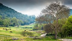 Valle de Oma 2 (P. Mendizabal) Tags: d750 500mm 14 14d landscape paisaje horse caballo arbol tree camino path verde hierba grass