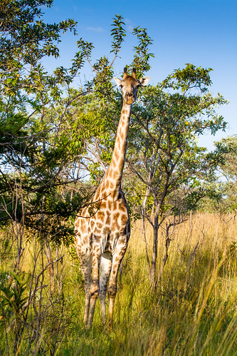 KrugerParkREIZ&HIGHRES-98