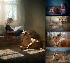 "Check Out This Series Created with ""My Big Red Dog"" (Sonya Adcock Photography) Tags:"