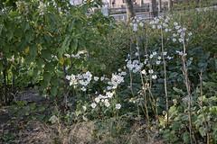 _DSF0052 flowers (CoriJae) Tags: batterypark hdr broadway downtownmanhattan newyork