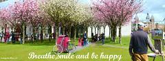 Breathe,smile and be happy (iJoydeep) Tags: tulip cherry blossom vangogh museum amsterdam holland netherland dutch
