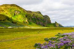 _RK00331.jpg (rakebo1958) Tags: myrdalur island landschaft urlaub vík suðurland is
