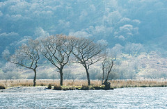 Trees at the edge of Crummock Water (Pexpix) Tags: crummockwater day1 lph lake mountain tree trees allerdaledistrict england unitedkingdom 攝影發燒友