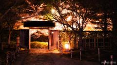 Sakura Cherry Blossom @Okazaki Castle (Alexander.W.Photography) Tags: japan cherry blossom night illumination