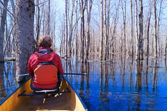 Contemplating Another World (deanspic) Tags: richmondfen fen photopaddle canoe canoeing paddle paddling spring wetland forest flooded floodedforest water river jockriver byfilter cpl g3x vfmc maple silvermaple trees flood rest resting sublime serene calm