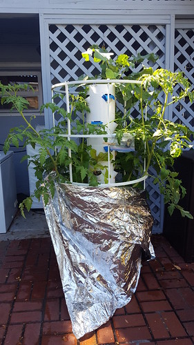 Tower Garden 2 months after planting seeds