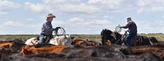 Modern Cowboys (maytag97) Tags: cowboy outside sky cloud blue horse cow desert sage brush maytag97