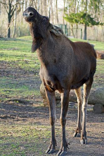 2017-03-25 München, Tierpark Hellabrunn 097