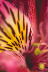 20170423_KCS_1868 (kaylaclare) Tags: flowers macro pink