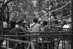 DSCF4292 (SLADE_6) Tags: monochrome 35 summicron snapshot photography v3 black white