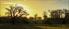 Springlight. Part 2. (Picture post.) Tags: landscape nature green sunrise trees sheep gate shadows fields hills paysage arbre sunlight