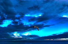 """Passata è la tempesta ... (wallace39 """" mud and glory """") Tags: gabbiano seagull mare sea cielo sky nuvole clouds blu blue"""