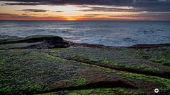green (The Photo Smithy) Tags: coogee ivorowe nsw southernbeaches sydney dawn rockshelf sunrise