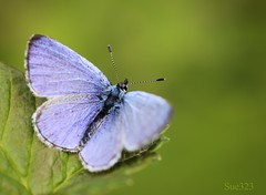 out there.. (Sue323 :-)) Tags: blue macro nature canon butterfly platinumheartaward