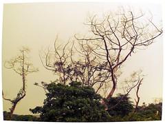 standing still (GaMe817) Tags: thunderstorm lightning thunder puno patay kidlat bagyo kulog