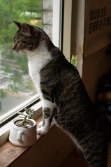 - (.cat) Tags: cat tabby