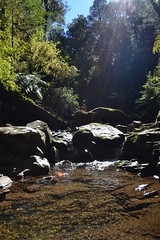 Five Day Creek (Spadey09) Tags: nature water creek outdoors waterfall bush rainforest australia nsw newsouthwales flowing nationalparks newenglandnationalpark