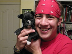 Me & our new puppy, Dolly! (krisjaus) Tags: dogs puppy bostonterrier puppies buddy smalldogs newpuppy bostonterriers babydogs krisjaus danielleeberhart