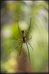 Spider - 1 (Syed Mojaddedul Islam (Sagor)) Tags: park fall water canon garden photography eos tea islam national dhaka syed sylhet bangladesh bazar sagor madhabkunda 60d sreemangal maulvi borolekha mojaddedul smisagor