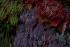 Cactus / El Pueblo de Los Angeles (Edwin Loyola) Tags: cactus abstract nature losangeles elpueblodelosangeles edwinloyola