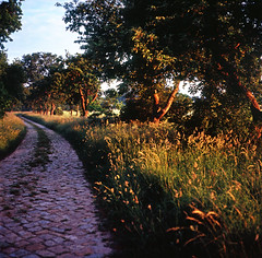 May, sunrise, old cobble road (gibberpl) Tags: 120 6x6 mamiya tlr c220 film analog mediumformat landscape fuji ngc poland velvia fujifilm fujichrome 80mm sekor 8028 cobbleroad