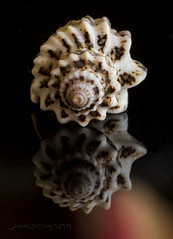 Shell (frosol) Tags: shells macro nature closeup seashells canon shell powershot seashell makro raynox raynoxdcr250 me2youphotographylevel2 me2youphotographylevel1 powershotsx50hs