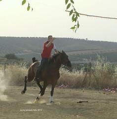 Corriendo cintas a caballo Alameda (Mlaga) (lameato feliz) Tags: caballo carrera