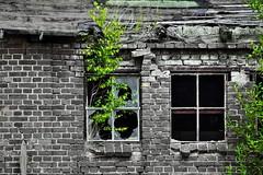 Decay (Kokeldil) Tags: old windows urban brick green broken canon eos industrial decay grunge grimmen grungy vorpommern mecklenburg mecklenburgvorpommern ostvorpommern 100d