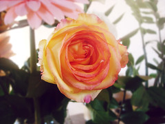 say hello to spring (I.souza) Tags: sonydscw90 setembrochove
