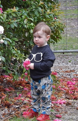 Boy with Red Shoes and Pink Flower
