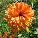 Splendeur orange, Garris, Basse-Navarre, Pays basque, Pyrénées Atlantiques, Aquitaine, France.